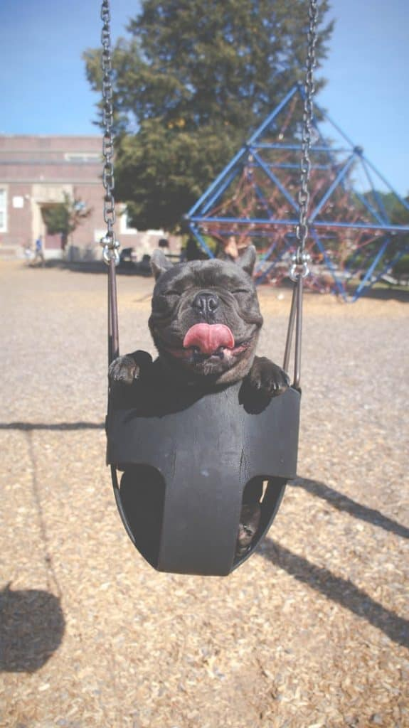 This image has an empty alt attribute; its file name is dog-in-a-swing-575x1024.jpg